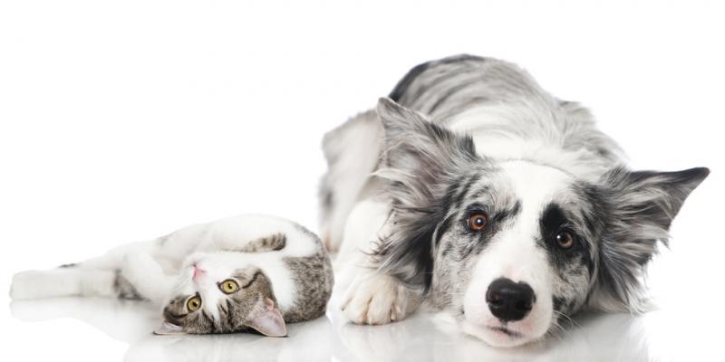 Achtsamkeit für Tiere | Mindfulness for Pets
