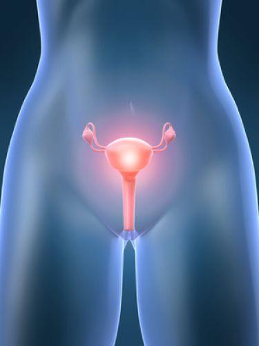 Eierstöcke optimieren | Ovaries Optimizer