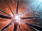 Nerven Regeneration | Nerve Regeneration