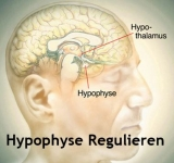 Hypophyse Regulieren | Pituitary Control