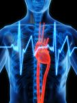 Herz-Kreislauf optimieren | Cardiovascular Optimizer