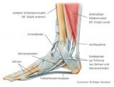 Knochen & Sehnen | Bones & Sinews